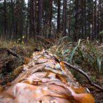На Рівненщині зловили лісокрадів