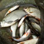 За незаконний вилов риби зарічняни заплатять майже 4 тис. грн. штрафу