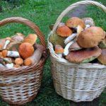 Володимиреччина запрошує любителів автентичного відпочинку на фестиваль грибів