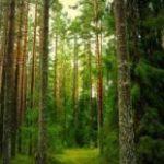 Використання природних ресурсів Рівненщини принесло казні майже 126 мільйонів гривень