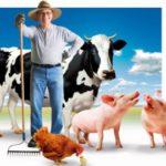 Фермери Рівненщини підсумують аграрний рік