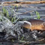 Рибалкам Рівненщини невдовзі доведеться заховати всі свої рибацькі снасті.