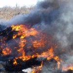 Рятувальники та екологи Рівненщини розкажуть про наслідки пожеж в екосистемах