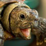 Рівнянам покажуть перегони черепах