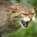На Рівненщині 171 особа потерпіла від покусів або контакту з хворими на сказ тваринами