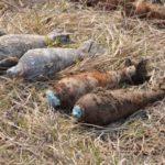 На Рівненщині знешкодили 47 вибухонебезпечних предметів