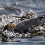На Рівненщині за нерестовий період рибалки допустили 120 порушень