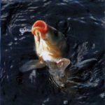 На Рівненщині висока ймовірність виникнення задухи риби