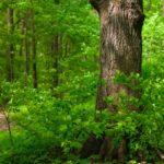 Рівненські ліси збагатили місцеві бюджети на понад 37 мільйонів гривень