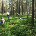 Ягідно-грибний сезон на Рівненщині додав бюджетам майже 2 мільйони гривень податків