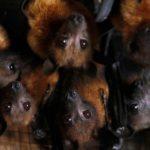 Рівнянам пропонують власноруч погодувати кажанів