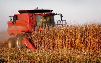 Аграрії Рівненщини завершують сіяти озимі під урожай наступного року
