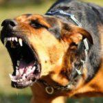 На Рівненщині зареєстровано 30 випадків захворювань тварин сказом