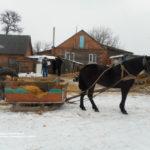 На Рівненщині п'ятеро школярів викрадали кролів