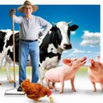 Рівненських фермерів запрошують  на стажування до Німеччини