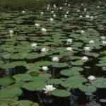 На Рівненщині чотири болота охоронятимуть на світовому рівні