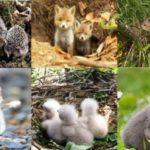 1 квітня на Рівненщині стартує «сезон тиші» для диких тварин