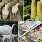 Рівненським аграріям повернули 2 мільйони по кредитах