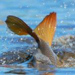 Хрінницьке водосховище зариблювали рибалки клубу «Случ»