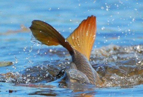 Рівненських рибалок попереджають: з 1 квітня починається старт нерестового періоду