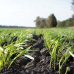 Попит на пільговий кредит у сільській місцевості зростає