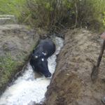 На Рівненщині рятувальники допомогли селянам дістати з двометрової ями із водою свійську тварину
