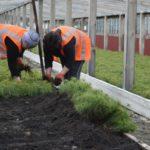 На Рівненщині стартувала весняна лісокультурна кампанія