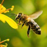 Поліцейські розслідують факти загибелі бджіл у трьох районах Рівненщини