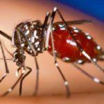 На Рівненщині комарі можуть поширювати малярію