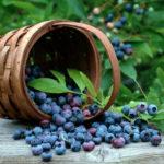 Для мешканців Рокитнівщини з 1 липня стартує сезонний пропуск у ліси Білорусі