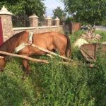 У Рівненському районі пенсіонер вкрав коня, щоб вивезти награбоване з будинку