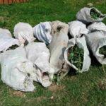На Рівненщині поліцейські виявили  посіви конопель та маку