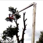 Рятувальники зрізали аварійне дерево, що загрожувало впасти на дах місцевої школи