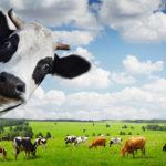На Здолбунівщині обговорили перспективи створення сімейних молочних ферм