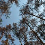 На Рівненщині у лісі зник чоловік