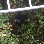 На Рівненщині рятувальники дістали тіло чоловіка з закинутого колодязя