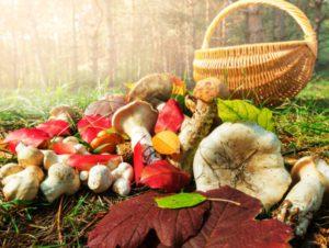 Шукали гриби, а знайшли артилерійський снаряд