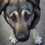 На Рівненщині жінка поступилася тваринам власним житлом