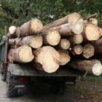 На Рівненщині прикордонники затримали автомобіль завантажений зрубаною деревиною