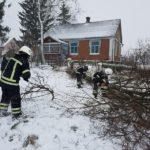 Рівненські рятувальники зрізали аварійні дерева