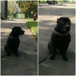 Рівнянка просить допомогти знайти собаку