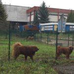 380 собак продовжують незаконно проживати у вольєрах на території Радіозаводу.