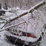 На Відінській на автомобіль впало дерево