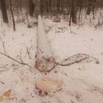 На Рівненщині при спробі зловити лісокрадів постраждав майстер лісу