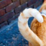 Врятувати кота приїхали рятувальники
