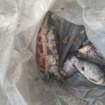 Дефіцит кисню призвів до мору риби на «Лебединці»