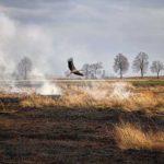 Рятувальники Рівненщини продовжують ліквідовувати пожежі у природних екосистемах