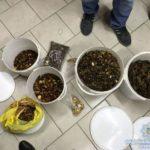 У Сарнах поліцейські вилучили у місцевого мешканця майже 25 кілограмів бурштину