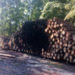 Невідомі підпалили лісопродукцію у Костопільському лісництві