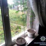 На Рівненщині поліцейські продовжують вилучати нарковмісні рослини